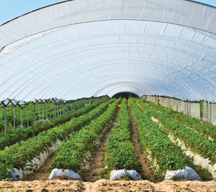 Câble chauffant pour agriculture